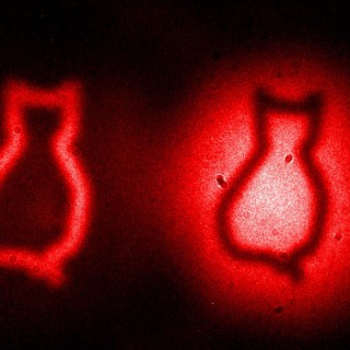 Caption: The cats represent the famous Schrödinger cat paradox, in which a quantum cat closed in a box can be dead and alive at the same time. The dark and light cat bodies are images of a cardboard cut-out. They arise due to destructive and constructive quantum interference, respectively. In this experiment the photons that interact with the cardboard cut-out are not detected, while the images are obtained by detecting only photons that never interact with the object. Credit: Gabriela Barreto Lemos  Quantum physics:  [11] Picturing Schrödinger's cat *IMAGES*    Attention! Embargoed until: 27-Aug-2014 13:00 US Eastern time | 18:00 London time  28-Aug-2014 02:00 Japanese time | 03:00 Australian Eastern time    DOI: 10.1038/nature13586  A quantum imaging approach to making images of objects, including in the shape of cats, using light particles (photons) that are never detected is described in Nature this week. Although the 'undetected' photons are the ones that interact with the objects, the images are inferred from the detection of photons that are entangled with the undetected photons but that do not interact with the object.  Gabriela Barreto Lemos and colleagues report an experiment that involves generating pairs of entangled (quantum correlated) photons that have different wavelengths but are otherwise indistinguishable. One of the pair is fired at the object while the other, non-interacting sister photon, is sent to the detector and can be used to form an image of the object based on the lasting (quantum) correlation between the two photons. The work demonstrates that images can be made with light at a different wavelength (colour) from the light interacting with the object.  CONTACT  Gabriela Barreto Lemos, (Austrian Academy of Sciences, Vienna, Austria) Tel: +43 699 19255014; E-mail: gabriela.barreto.lemos@univie.ac.at