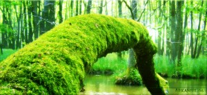mossy_log_by_arkanjel8