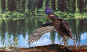 Archaeornithura meemannae is the oldest known relative of modern birds (Credit: Wang et al/Nature)