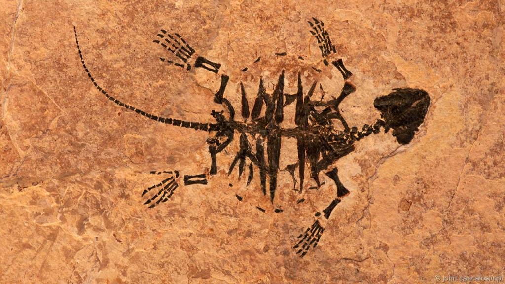 দশ মিলিয়ন বছরের পুরনো কচ্ছপের ফসিল।