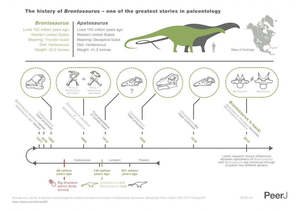 1200px-Brontosaurus_infographic