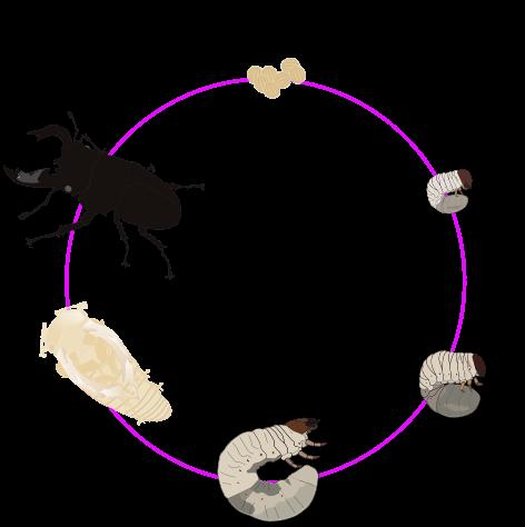 গুবরেপোকার প্রাথমিক পরিচিতি বিজ্ঞানযাত্রা
