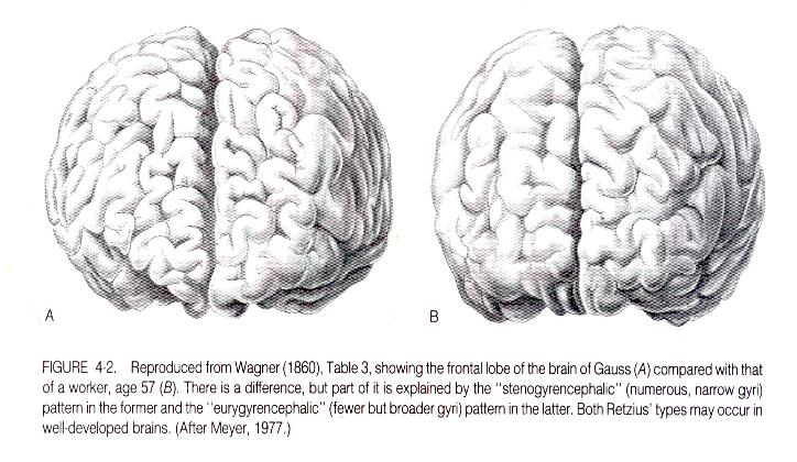 Gauss_Brain-724x420
